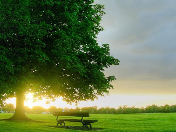 ¡Abraza un Árbol en su Día!