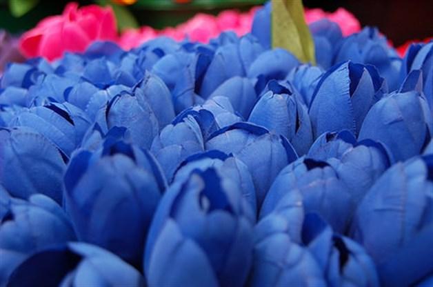 Lo Que No Sabias De Los Tulipanes